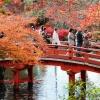 แนะนำเที่ยวญี่ปุ่น PART--วัด Daigo-ji