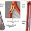 โปรโมชั่นพิเศษ 5xx-850 บาท สมุนไพรดีท๊อกซ์เลือด ABO-X ช่วยลดสารพิษในตับ ไต และฟอกเลือดให้สะอาด ช่วยลดฝ้าเลือด และ สิวอักเสบที่เกิดจากการสะสมสารพิษ ในตับและในเลือด thumbnail 3