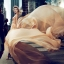 Elie Saab Le Parfum Shower Cream 50 ml. thumbnail 3