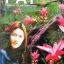 MP3 season of love Pat Tarisa Leawsiripong thumbnail 1