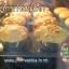 สอนทำเค้กมาม่อน ขนมเค้กมาม่อน มาม่อนเค้ก มาม่อนวานิลลา มาม่อนใบเตย มาม่อนช็อคโกแลต thumbnail 61