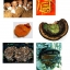 มัชรูม ดริงค์ Mushroom Drink น้ำเห็ดสกัดเพื่อสุขภาพ 6 สายพันธุ์ thumbnail 4