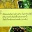 ป่าทุ่งฉาง / ชาลี เอี่ยมกระสินธุ์ thumbnail 2