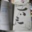 ดายู ชื่อนี้แสบสุดๆ 6 เล่มจบ / Shouta Kikuchi thumbnail 9