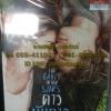 DVD หนังฝรั่ง ดาวบันดาล
